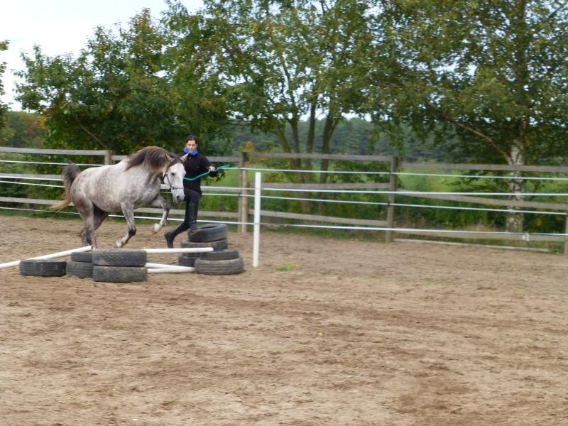 Jumping: Ellen with Legolas