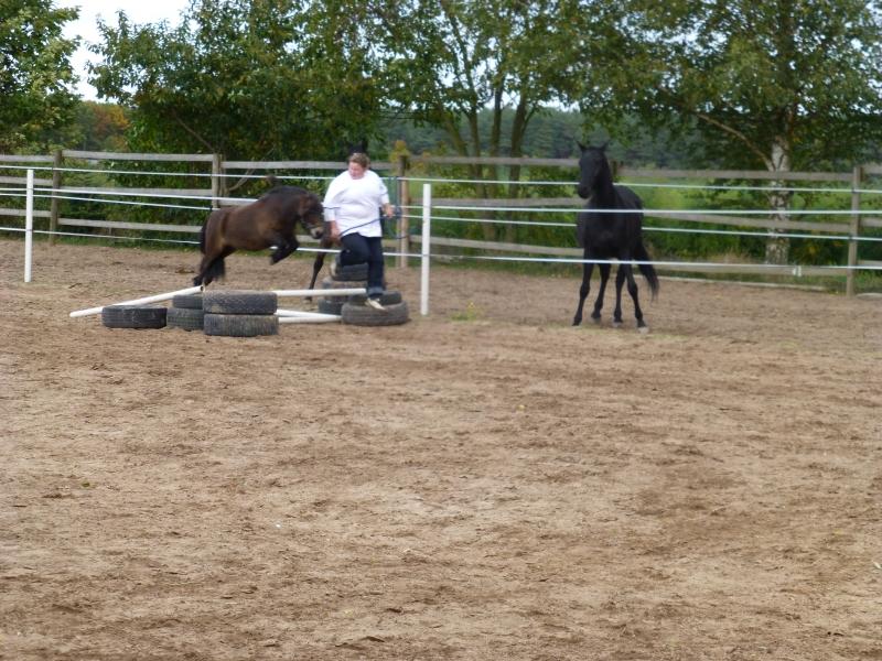 Jumping: Nadine with Gino
